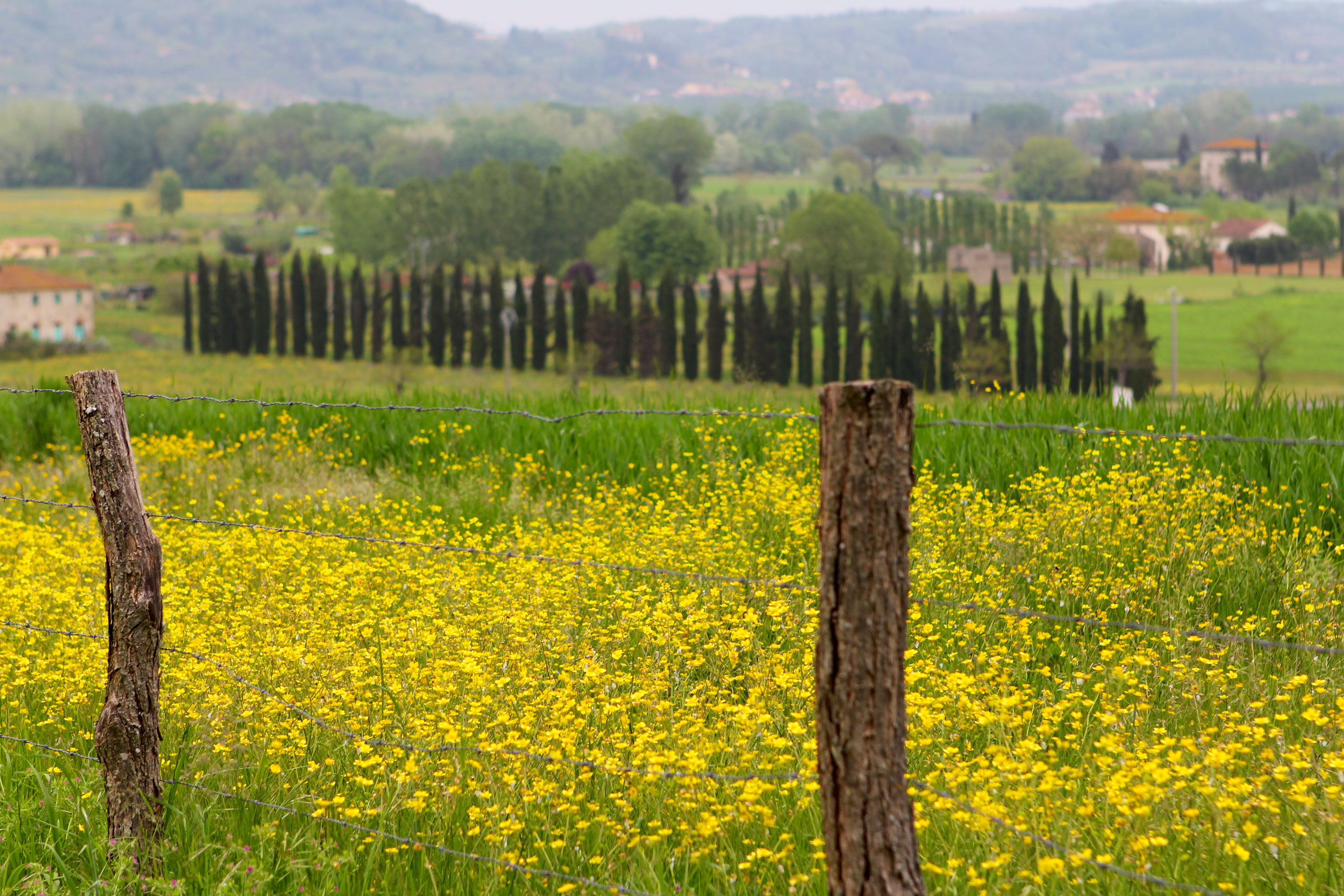 Typically Tuscany - Landscape