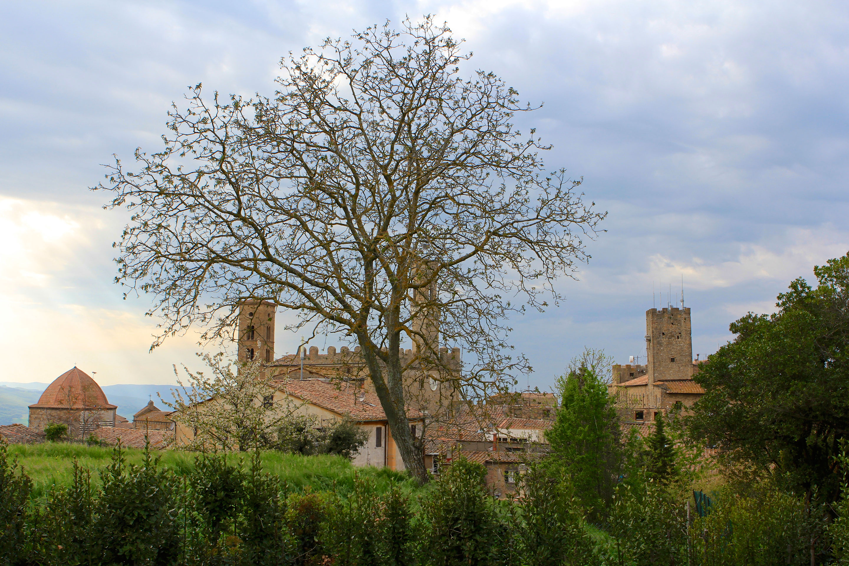 A Single Tree Frames This Scene in Voleterra, Tuscany