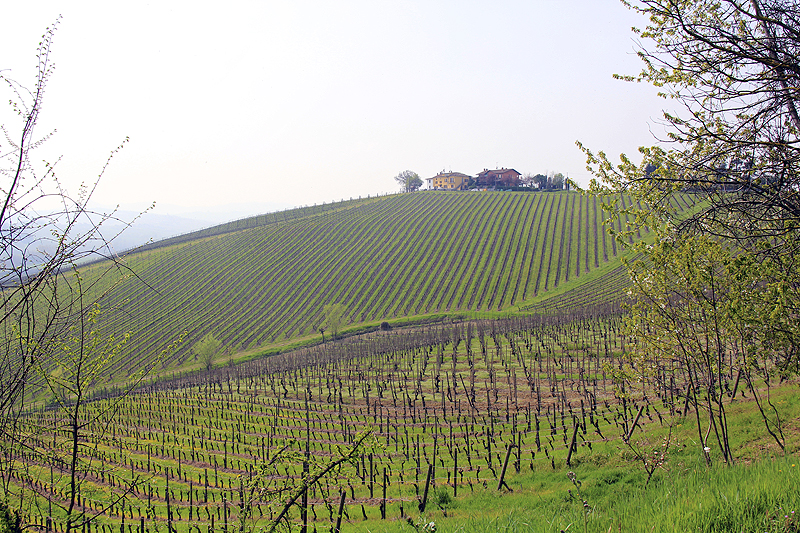 Vineyards of Rovescala